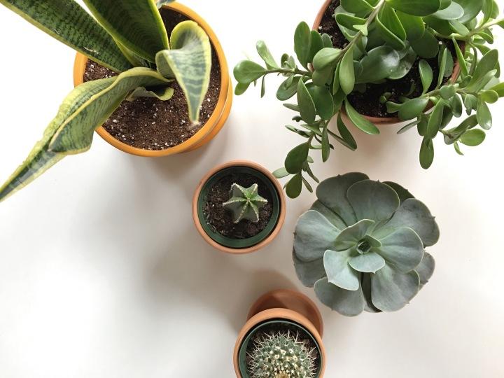Plantin' Babies